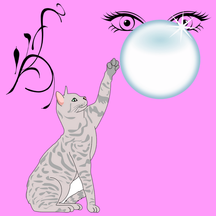 CAT WITH BUBBLE